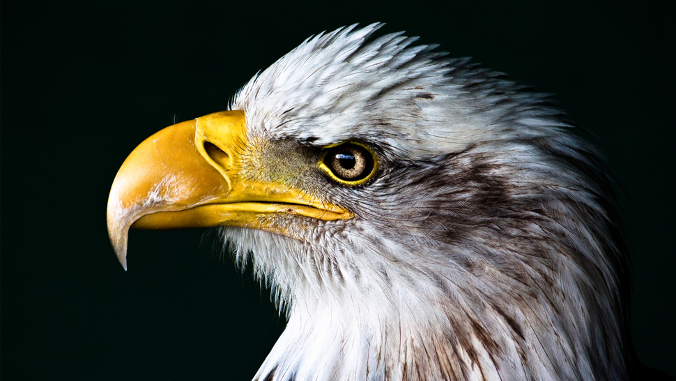 images/unsplash_eagle.jpg